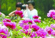 """北京植物园""""史湘云醉眠芍药茵"""" 游玩指南"""