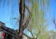 北京胡同游:南锣鼓巷的古韵新风