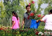 北京国际鲜花港香水百合节六月中旬开展游玩贴士