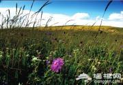空中草原迎来盛夏花季