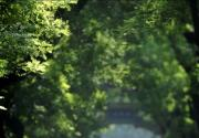 皇城国际旅游节开幕 低碳尝鲜京城文化