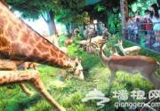 北京自然博物馆非洲斑马标本能看还能摸
