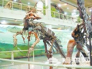 古动物馆的恐龙化石