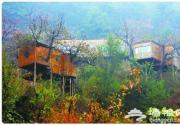 京郊两大树屋旅馆 睡在树上的浪漫