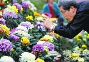 北京植物园2012年菊花文化节开幕