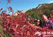 今秋赏红叶已到好时节 八达岭森林公园开公交专线