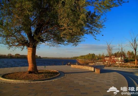通州大运河森林公园 秋游美景如画