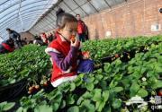 香山草莓采摘园
