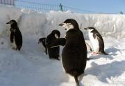 冬季玩雪好去處 工體首屆極地冰雪嘉年華攻略