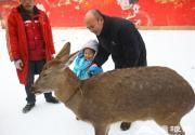 2013玉渊潭第四届冰雪文化节 灵潭飞雪 玉湖同春