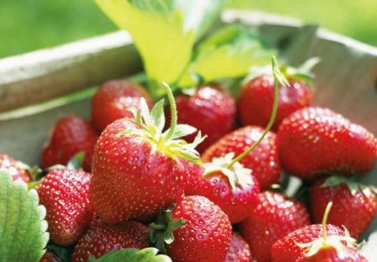 京郊草莓采摘、住农家、泡温泉,快乐周末ABC