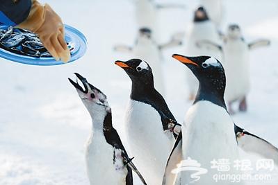 北京体验工体冰雪嘉年华 门票30元众多设施免费玩
