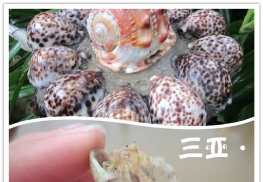 吃喝玩乐,一家三口海南三亚的省心省钱自由行。