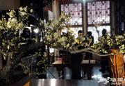 颐和园腊梅展 百年古梅绽放