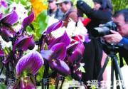 北京植物园兰花展 万盆兰花闹元宵