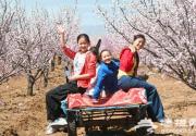 2013延慶縣第十二屆杏花節歡迎您