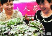 """北京植物园迎接妇女节展出30余种""""女人花"""""""