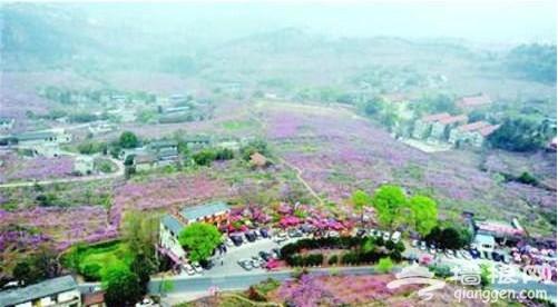 成都国际桃花节开幕 可坐直升机观盛景