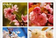 北京三月四月赏花景点推荐