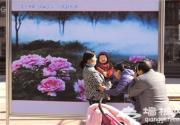 牡丹摄影展 王府井步行街开展