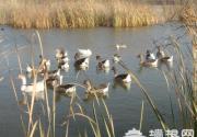 京郊3月观鸟爱好者指南