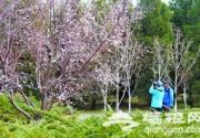 奥运森林公园观花植物绽放