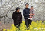 2013晋州市第八届梨花节隆重开幕