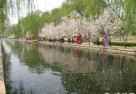 2013元大都遗址公园第十六届海棠花节开幕