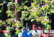 北京市属公园推荐10处赏花最佳景点