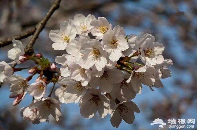 北京植物园桃花节 5条赏花线路推荐
