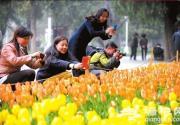 2013中山公园郁金香花展 30万株郁金香盛放