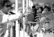 2013景山公园牡丹绽放 预计中旬达到盛花期