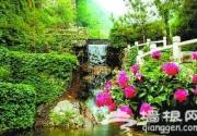 2013响水湖芍药节周末开幕