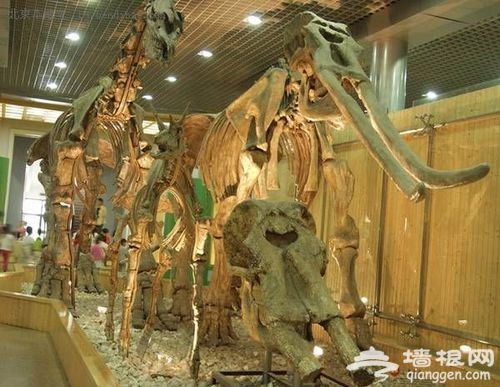 儿童节亲子游 四条北京路线游出别样范儿