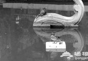 日坛公园野鸭疑被盗 11只小鸭一周只剩1只