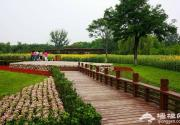 2013奥林匹克森林公园百亩葵花展指南