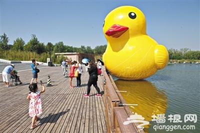 山寨大黄鸭游进南海子公园