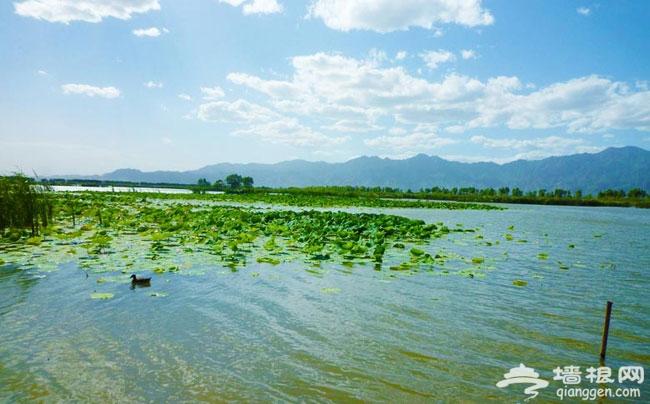 野鸭湖湿地公园 秋季亲子游好去处