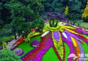 2013第11届中国菊花展览会将于6日在顺义国际鲜花港拉开帷幕