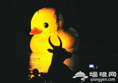 大黄鸭入住,颐和园月票、年票限时入园?[墙根网]