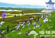 顺义潮白河畔北京最大滨河森林公园今天开园