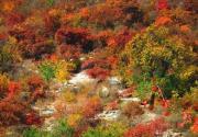 幽嵐山紅葉節開幕  京郊最大紅葉觀賞地開始迎客