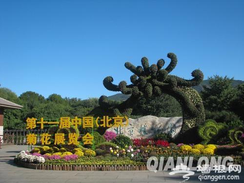 2013北京菊花文化节在北京植物园内举办[墙根网]