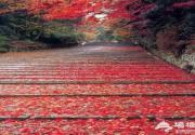 2013圣泉山第五届红叶旅游文化节开幕 活动内容丰富