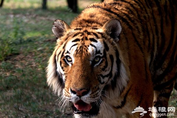 大兴野生动物园自助游攻略