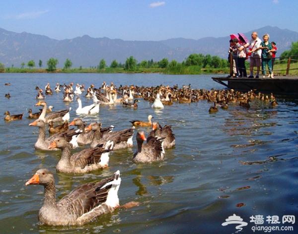 野鸭湖--最原生态的垂钓处