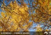 喇叭沟门赏秋游玩实用攻略