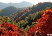 邢台大峡谷红叶