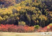 玉渡山看彩叶 层林尽染秋意正浓