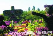北京植物园菊菊海花田绚丽多彩